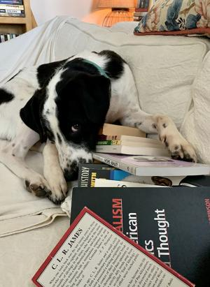 A dog sniffing through books spread across a couch